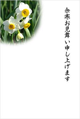 新春花色年賀状